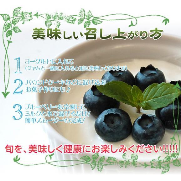 千葉県産 生 ブルーベリー 約100g×10個 送料無料 ※冷蔵04