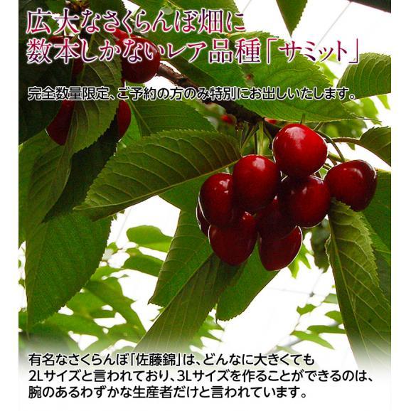 送料無料 北海道仁木町産 さくらんぼ「サミット」 約500g 冷蔵02