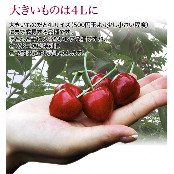 送料無料 北海道仁木町産 さくらんぼ「サミット」 約500g 冷蔵03