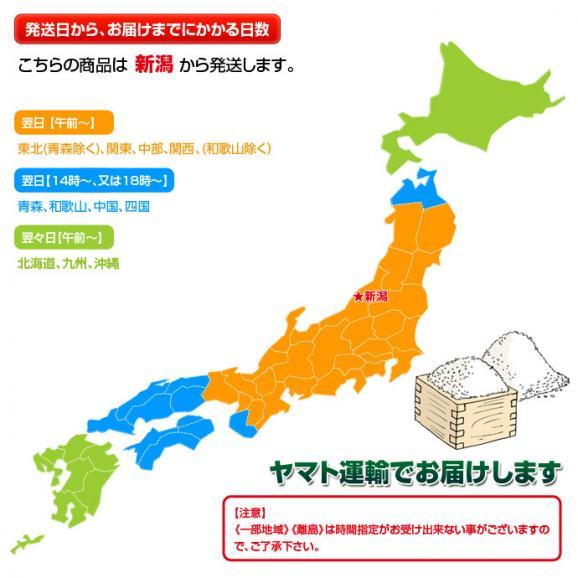 《送料無料》新潟県産「八色西瓜(やいろすいか)」 Lサイズ 2玉 合計約13kg 秀品 ☆05