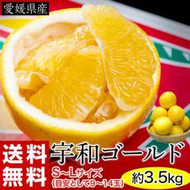 宇和ゴールド 愛媛県産 秀~優品 S~L 約3.5kg(目安として9~14玉) 送料無料 河内晩柑