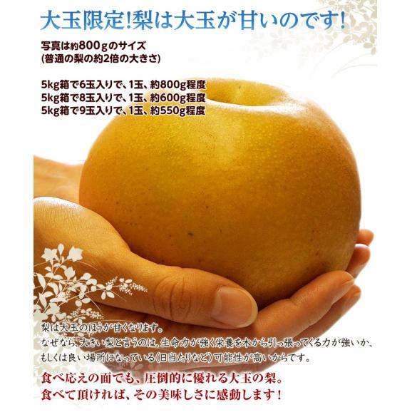 『あきづき梨』栃木県宇都宮産 約5kg(6~10玉入)※冷蔵 送料無料04