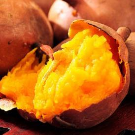 安納芋 芋 いも 種子島産 循環型農法 安納紅芋 正規品 約5kg 送料無料