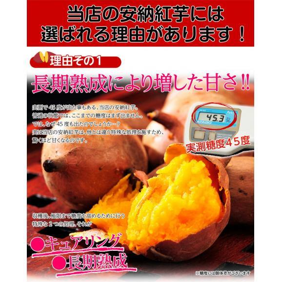 安納芋 芋 いも 種子島産 循環型農法 安納紅芋 正規品 約5kg 送料無料02