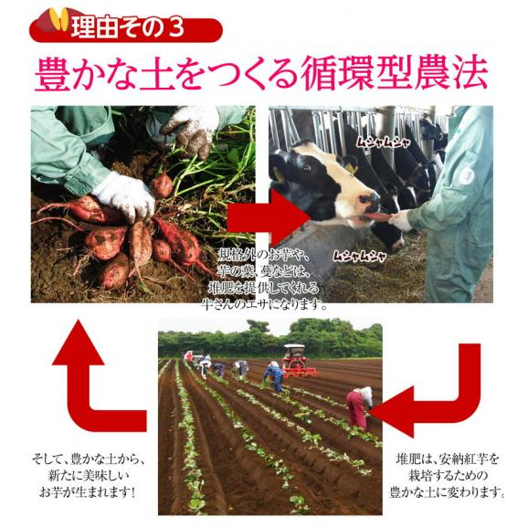 安納芋 芋 いも 種子島産 循環型農法 安納紅芋 正規品 約5kg 送料無料04