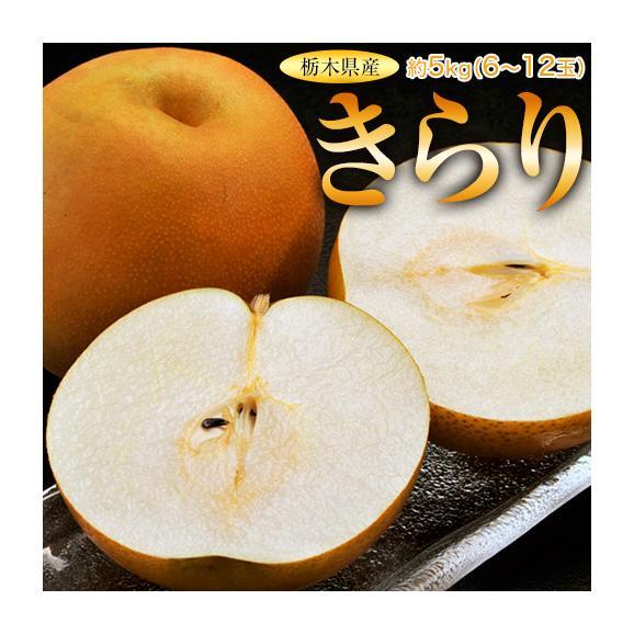 梨 なし 栃木県産 きらり梨 約5kg (6~12玉) 送料無料04