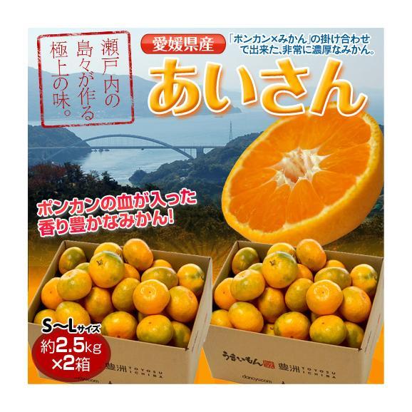 みかん 愛媛県産 あいさん S~Lサイズ 約2.5kg×2箱 送料無料01