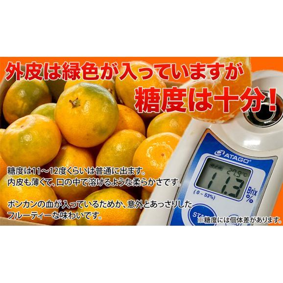 みかん 愛媛県産 あいさん S~Lサイズ 約2.5kg×2箱 送料無料02