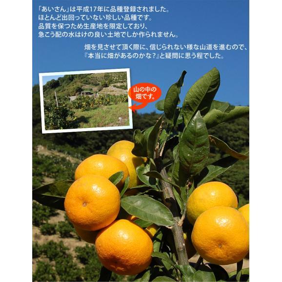 みかん 愛媛県産 あいさん S~Lサイズ 約2.5kg×2箱 送料無料03