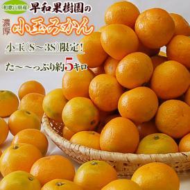送料無料 和歌山県産 早和果樹園の小玉みかん S~3Sサイズ限定 約5kg