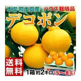 《送料無料》熊本産 ハウスデコポン 化粧箱 58玉 約2キロ ○