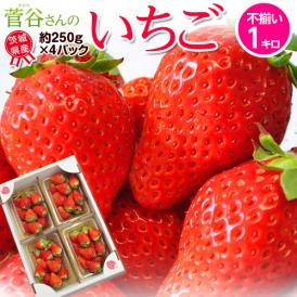 『菅谷さんのいちご』 茨城県産  お試し不揃い 約1kg(250g×4) ※冷蔵 送料無料