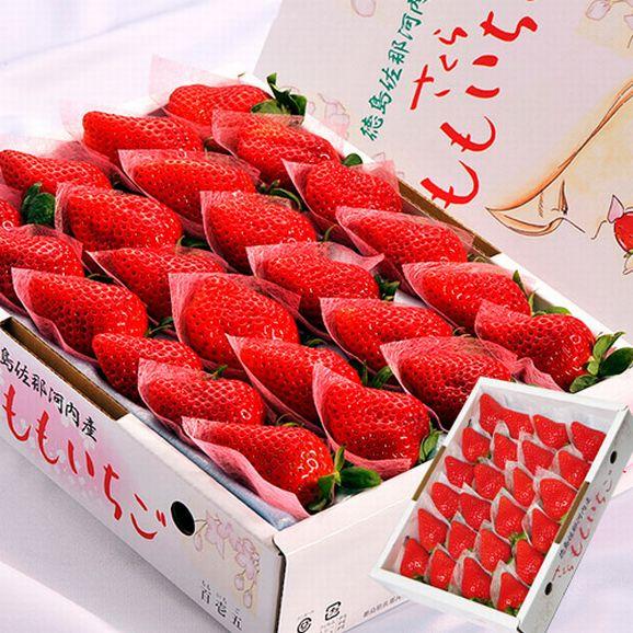 いちご イチゴ 苺 ギフト 徳島県佐那河内産 さくらももいちご 化粧箱 20~24粒 約700g ※冷蔵 送料無料01