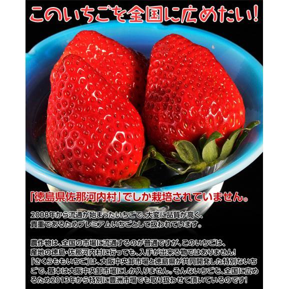 いちご イチゴ 苺 ギフト 徳島県佐那河内産 さくらももいちご 化粧箱 20~24粒 約700g ※冷蔵 送料無料02