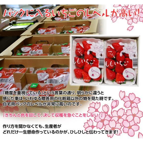 いちご イチゴ 苺 ギフト 徳島県佐那河内産 さくらももいちご 化粧箱 20~24粒 約700g ※冷蔵 送料無料04