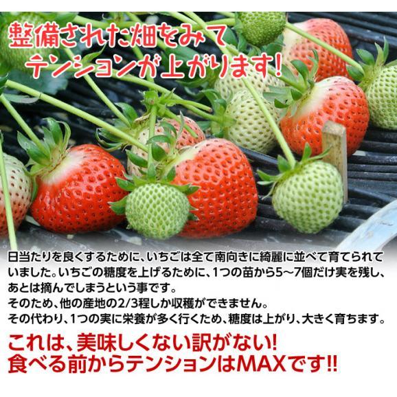 いちご イチゴ 苺 ギフト 徳島県佐那河内産 さくらももいちご 化粧箱 20~24粒 約700g ※冷蔵 送料無料05