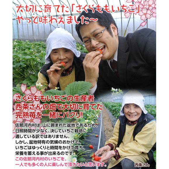 いちご イチゴ 苺 ギフト 徳島県佐那河内産 さくらももいちご 化粧箱 20~24粒 約700g ※冷蔵 送料無料06