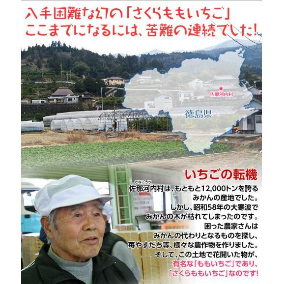 いちご 徳島県佐那河内 さくらももいちご A~2A又はL~2L 約220g×2パック03