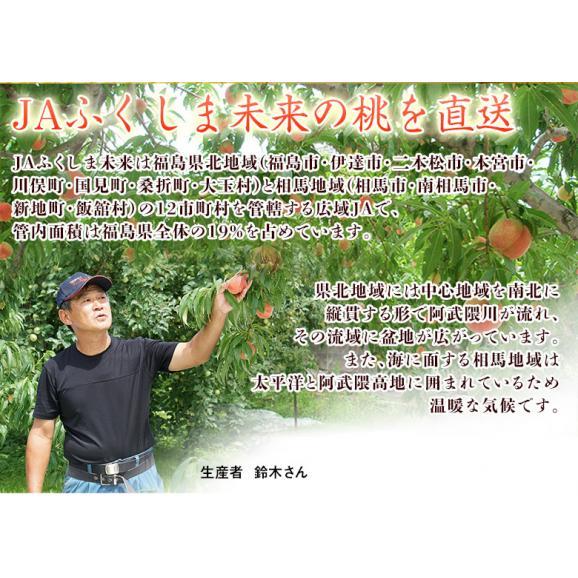 福島県産 「伊達の桃」 特秀品 約1.7kg×2箱 (1箱:7~9玉) 産地直送 ※常温 送料無料03