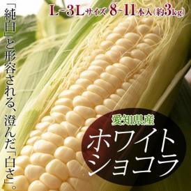 愛知県産 トウモロコシ 『ホワイトショコラ』 8~11本入(L~3Lサイズ) 約3kg 冷蔵 産地直送 送料無料 とうもろこし