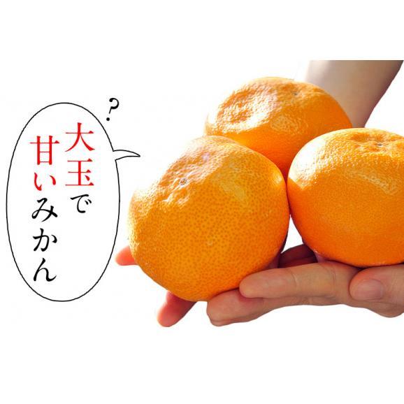 『うまか美人(超大玉)』佐賀県産 みかん 2L~3Lサイズ 約5kg 産地箱入※常温 送料無料04