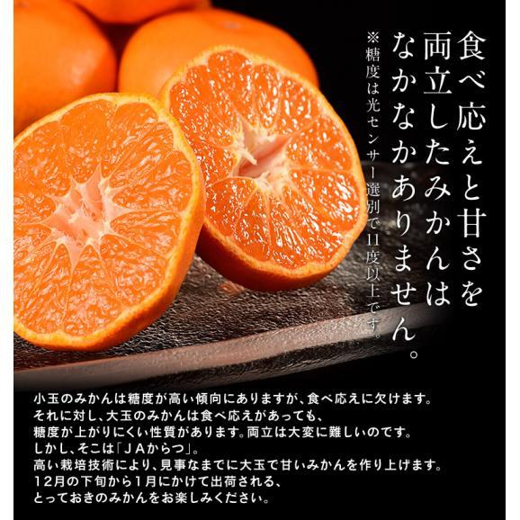 『うまか美人(超大玉)』佐賀県産 みかん 2L~3Lサイズ 約5kg 産地箱入※常温 送料無料05