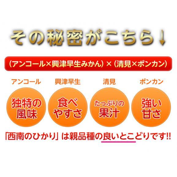 新品種のみかん 送料無料 香川県産 西南のひかり 約5kg 秀~優品 M~3Lサイズ03