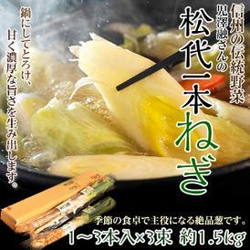 ねぎ ネギ 野菜 長野県産 伝統野菜認定 松代一本ねぎ 鍋に最適 1箱 1~3本入×3袋 約1.5kg
