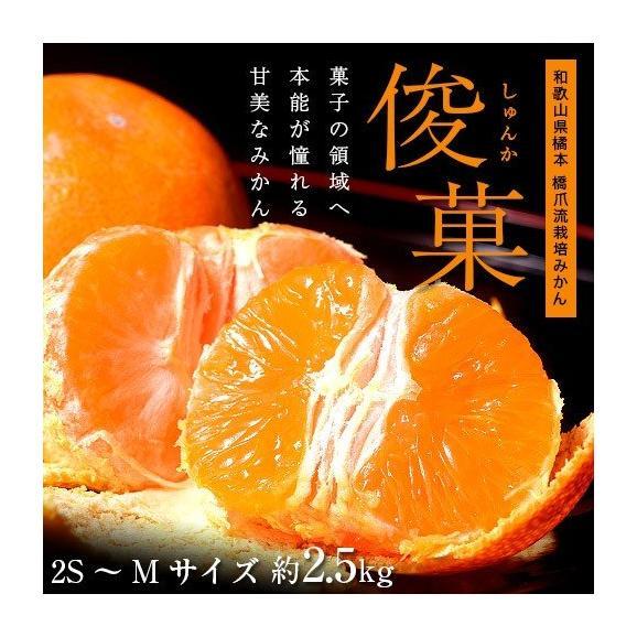 橋爪流栽培みかん 俊菓(しゅんか) 和歌山県産 2S~Mサイズ 約2.5キロ ※常温 送料無料02