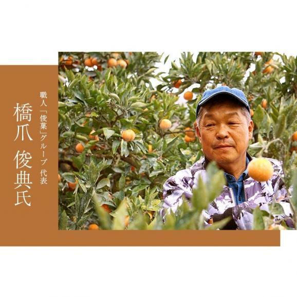 橋爪流栽培みかん 俊菓(しゅんか) 和歌山県産 2S~Mサイズ 約2.5キロ ※常温 送料無料06