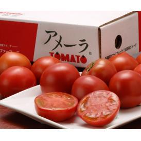 『アメーラトマト』 静岡・長野産 3S~2L 約900g(7~23玉入) ○