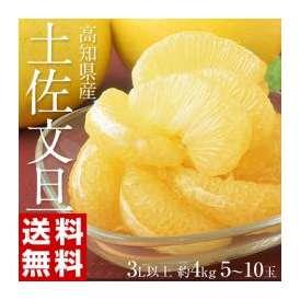 《送料無料》『土佐文旦』 高知県産 3L以上 (510玉) 約4kg ○