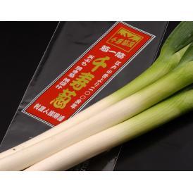 千住葱商 葱茂の『千寿葱』 お試し約1kg(5本前後)送料無料