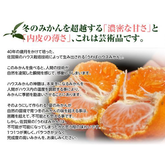 みかん 佐賀県産 JAからつ 超小玉ハウスみかん 2~3Sサイズ 約2kg 送料無料 ☆02