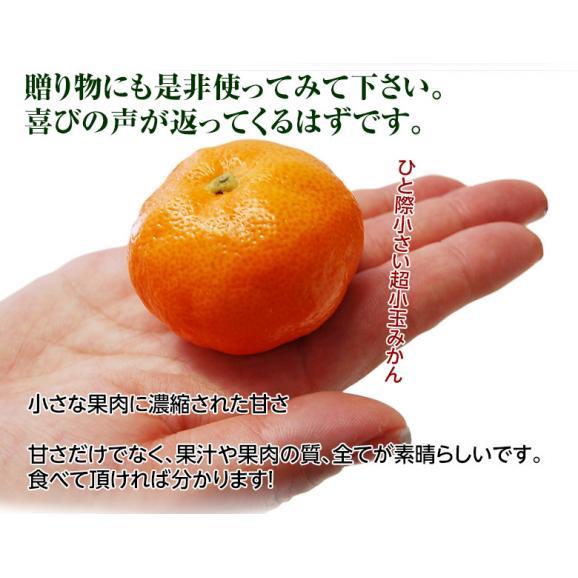 みかん 佐賀県産 JAからつ 超小玉ハウスみかん 2~3Sサイズ 約2kg 送料無料 ☆03