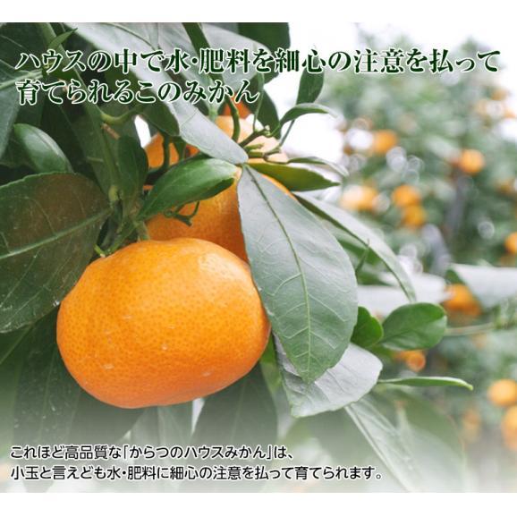 みかん 佐賀県産 JAからつ 超小玉ハウスみかん 2~3Sサイズ 約2kg 送料無料 ☆04