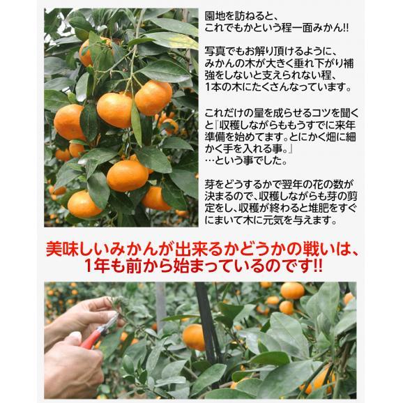 みかん 佐賀県産 JAからつ 超小玉ハウスみかん 2~3Sサイズ 約2kg 送料無料 ☆05