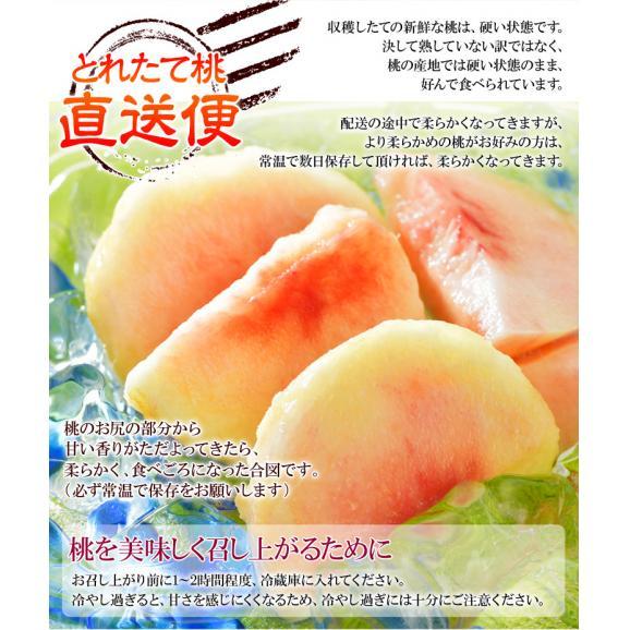 送料無料 和歌山 紀の里産「嶺鳳桃」 約2kg(6~8玉)化粧箱入り06