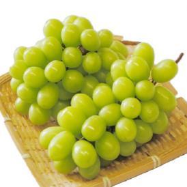 種無・皮ごと食べられる葡萄!