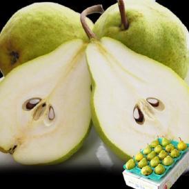 送料無料 洋なし 山形産 西洋梨「エルドラド」約5kg 12~20玉