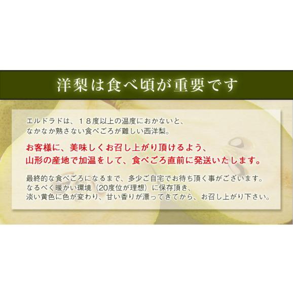 送料無料 洋なし 山形産 西洋梨「エルドラド」約5kg 12~20玉05