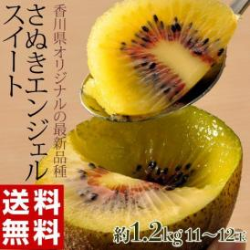 キウイフルーツ キウイ 香川県産 さぬきエンジェルスイート S~2L (11~14玉入) 約1.2kg 送料無料