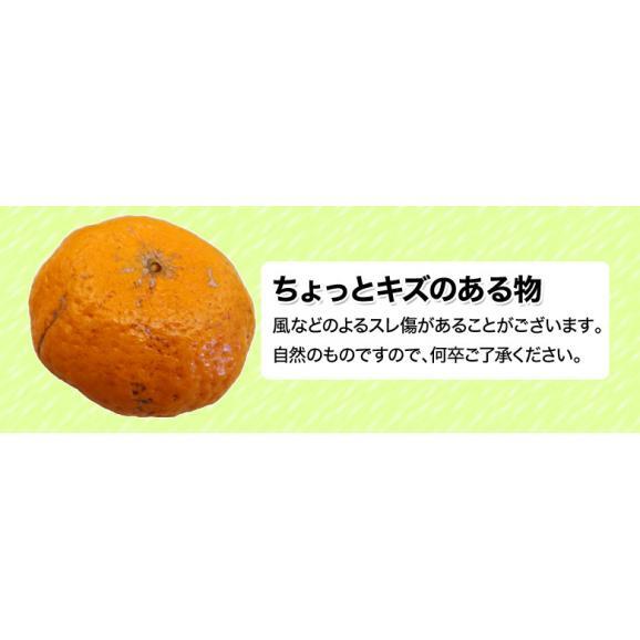 静岡県産 望月さんのポンカン 20~27玉 約3kg バラ詰め 多少の傷あり品 送料無料02