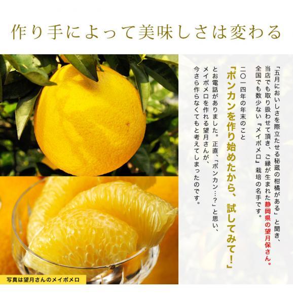 静岡県産 望月さんのポンカン 20~27玉 約3kg バラ詰め 多少の傷あり品 送料無料03