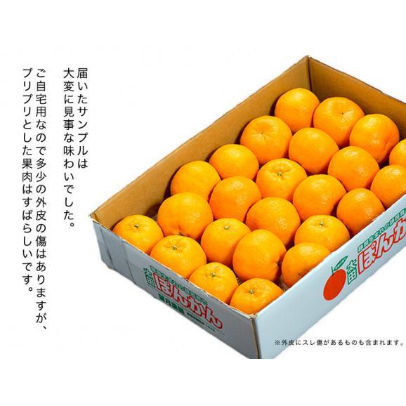 静岡県産 望月さんのポンカン 20~27玉 約3kg バラ詰め 多少の傷あり品 送料無料04