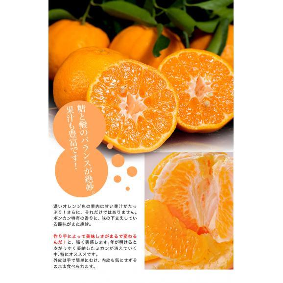 静岡県産 望月さんのポンカン 20~27玉 約3kg バラ詰め 多少の傷あり品 送料無料05