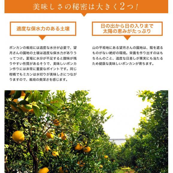 静岡県産 望月さんのポンカン 20~27玉 約3kg バラ詰め 多少の傷あり品 送料無料06