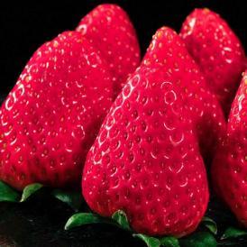 いちご ギフト 静岡県産 きらぴ香 約300g×2パック(等級:グランデ又はデラックス)イチゴ 苺 フルーツ 果物 贈り物 冷蔵