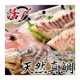 来島海峡の天然活〆真鯛  中(全長34cm前後) ※冷蔵 ○