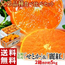 柑橘 みかん 長崎県産 せとか &麗紅 セット 合計約5kg (約2.5kg×2箱) 送料無料